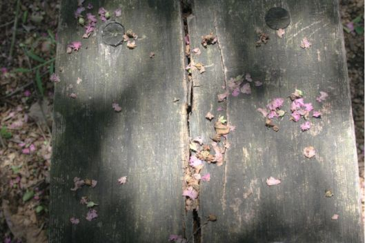 Flower Petals on Bench