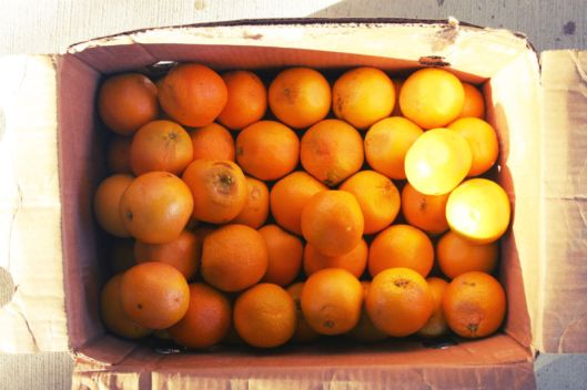 Box of Oranges
