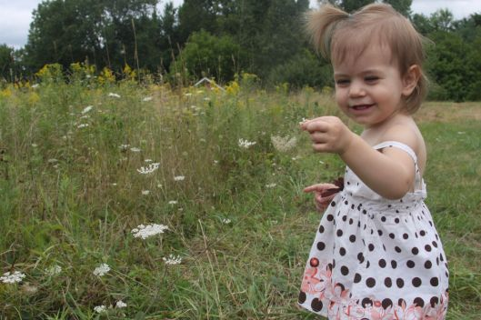 Jane's Queen Anne's Lace