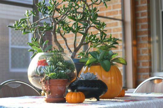 Pumpkins and Plants