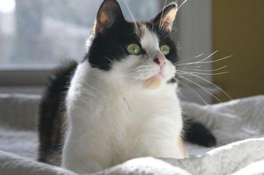 Cat Pic!