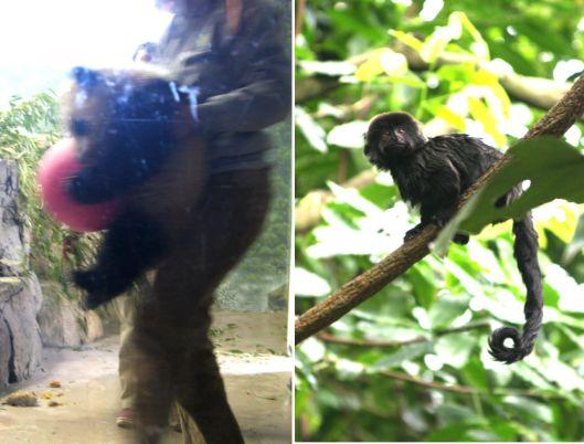 Baby Panda & Monkey