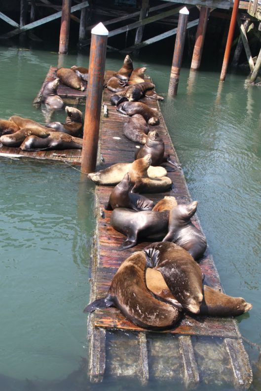Sea Lions at Newport Oregon
