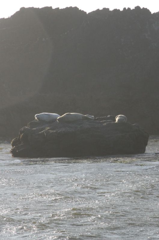 Seal Rock Seals