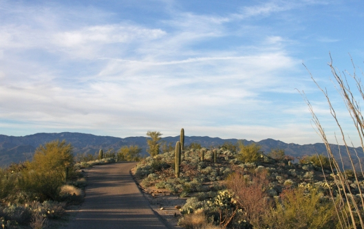 Saguaro National Park_2481