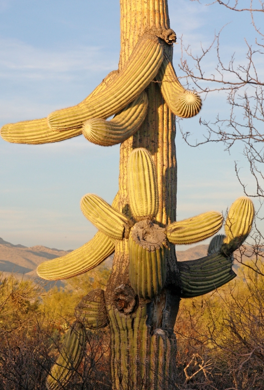 Saguaro National Park_2491