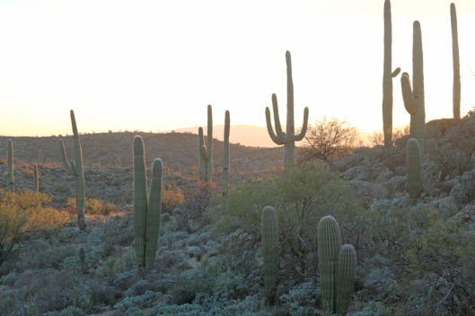 Saguaro National Park_2496