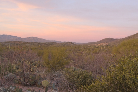 Saguaro National Park_2499