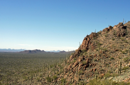 Saguaro National Park_2433