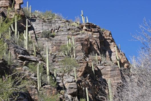 Tucson_2594